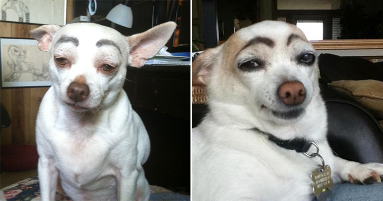 Awkward Internet Trend: Dogs With Makeup Eyebrows