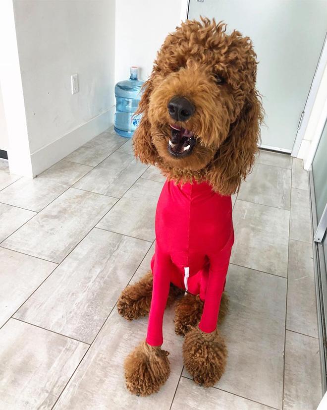 Funny dog onesie.