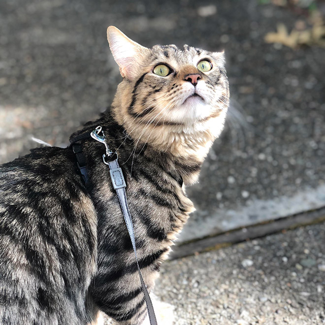 Indoor cat going outside for the first time.