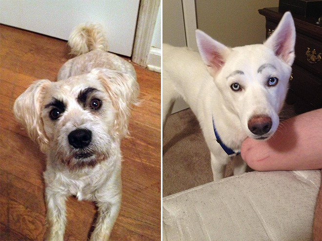 Dogs with makeup eyebrows.