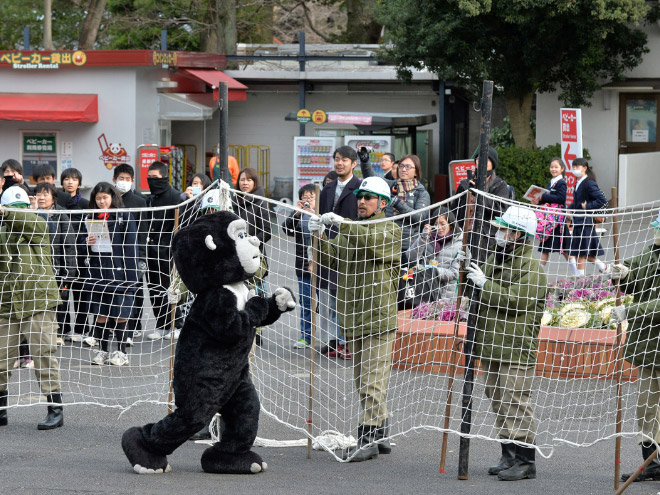 Animal escape drill in a Japanese zoo.