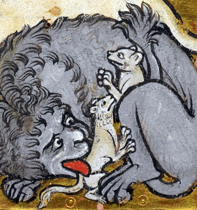 Butt licking medieval cat art.