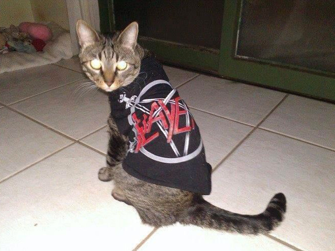 Slayer cat.