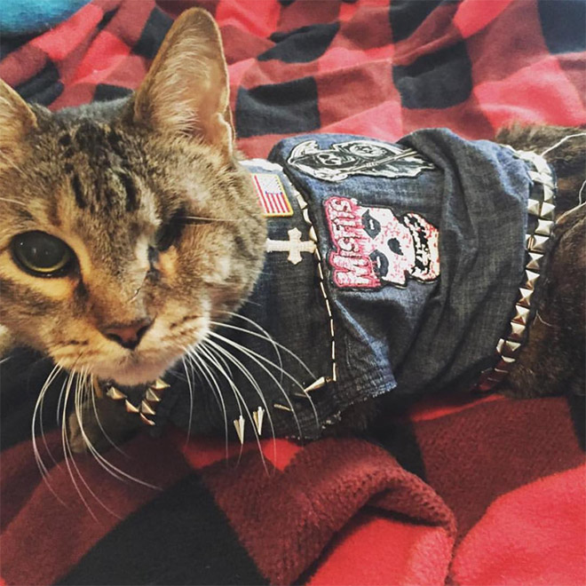 Awesome metal battle vest wearing cat.