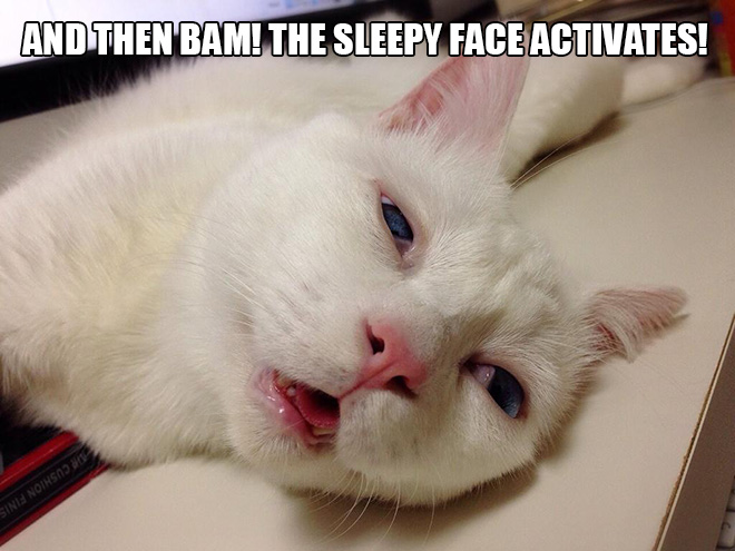 Cat with the funniest sleeping face ever.