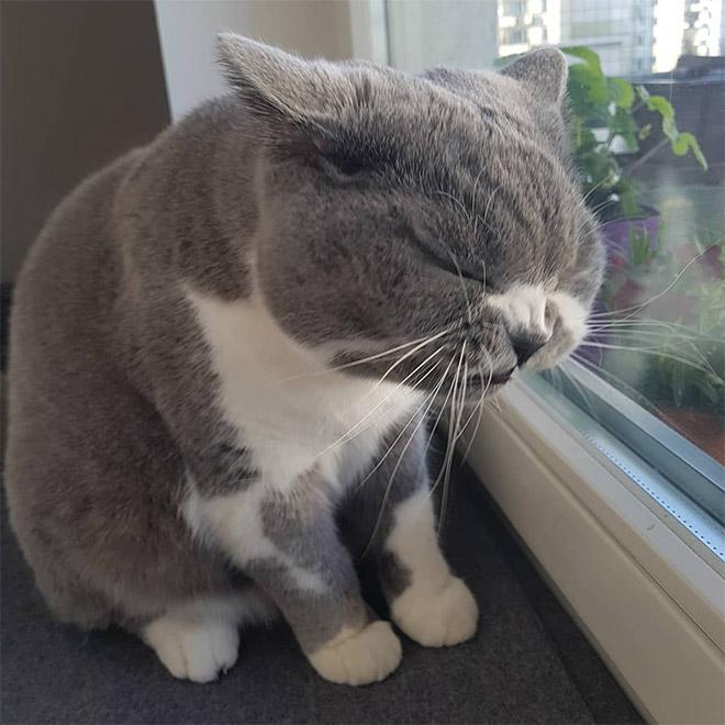 Cat caught mid-sneeze.