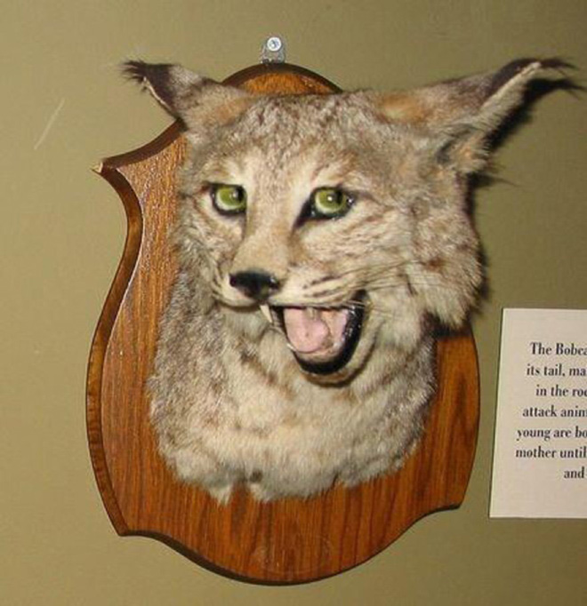 Funny taxidermy fail.