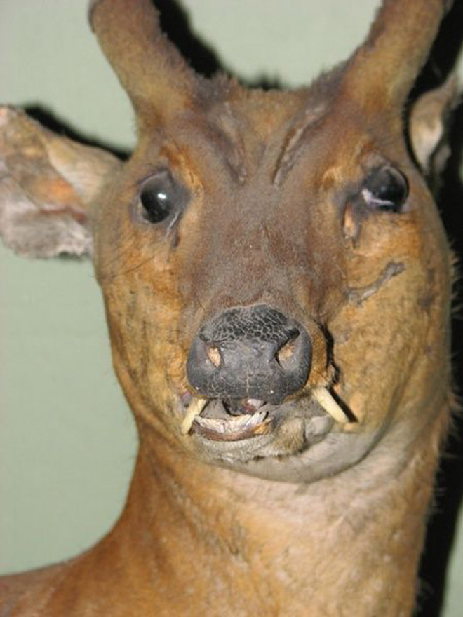 Taxidermy fail.