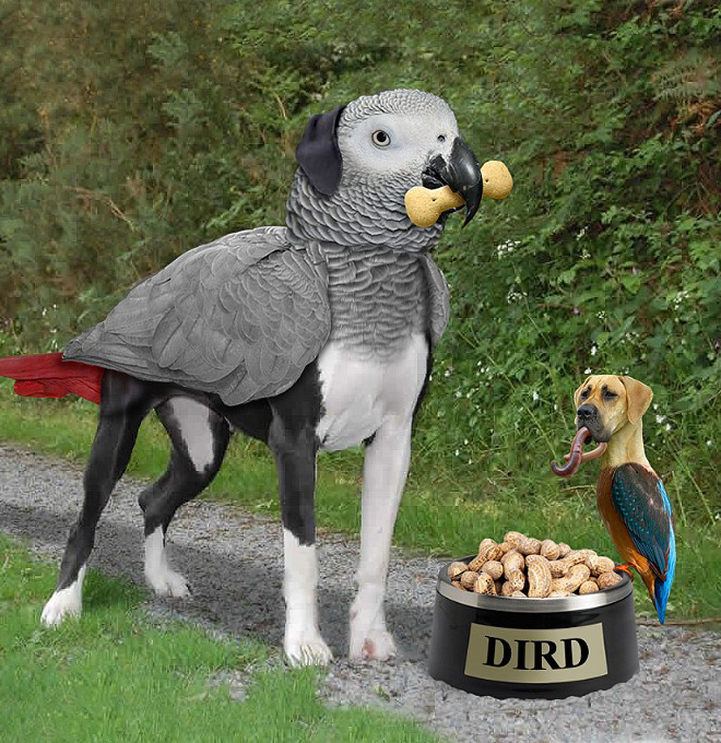 Dog and bird mashup.