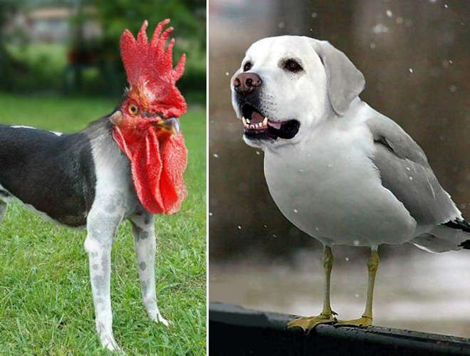 Dogs and birds mashup.