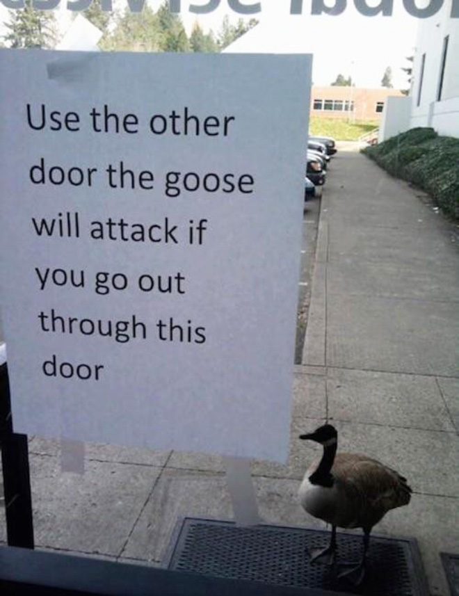 Some birds are jerks...