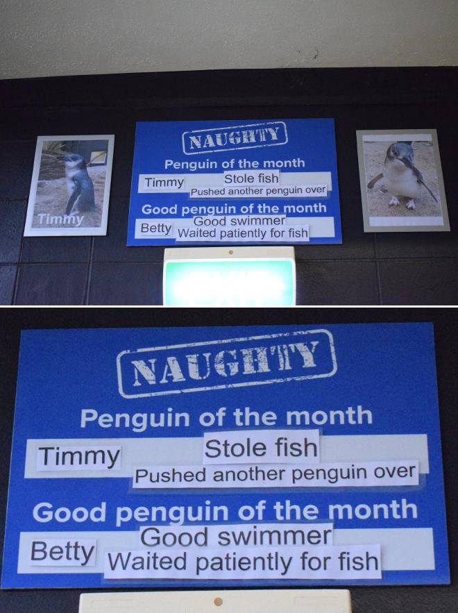 Penguin shaming.