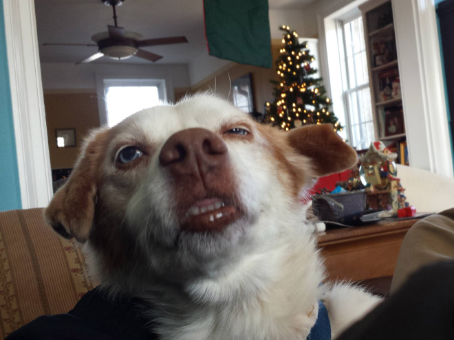 Dog caught mid-sneeze.