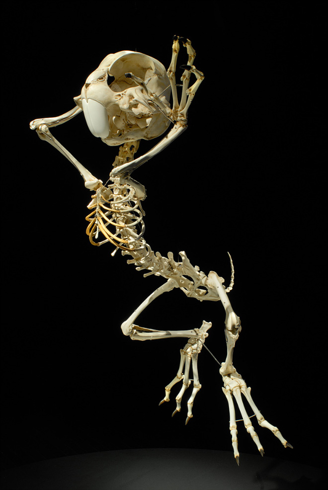 Cartoon skeleton.
