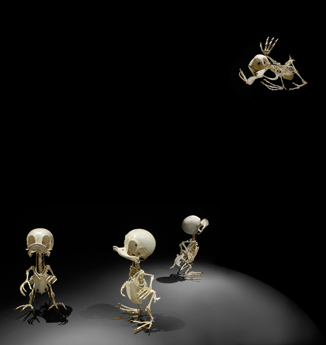 Cartoon skeletons.