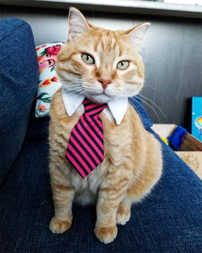 Businessman cat.
