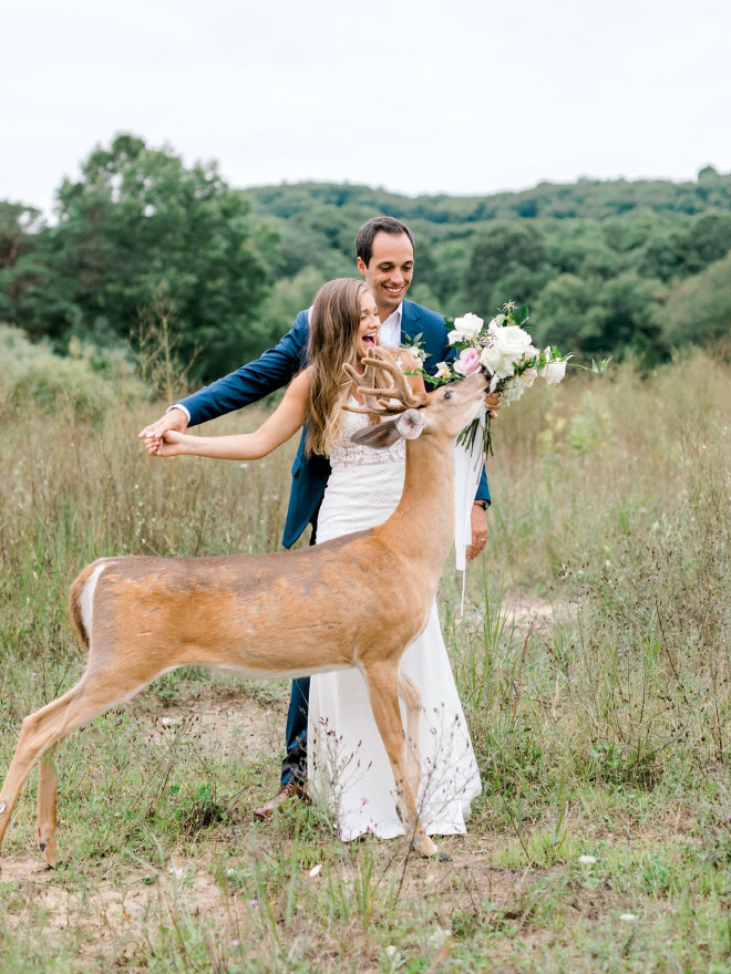Wedding photo shoot interrupted by a deer.