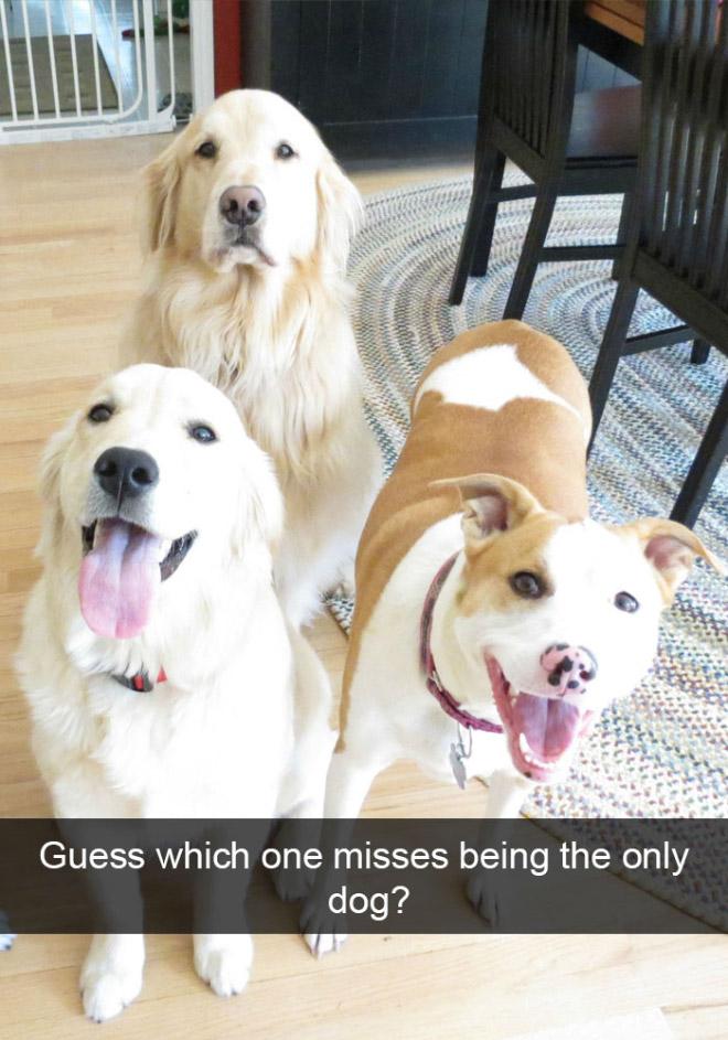 Funny dog snapchat.