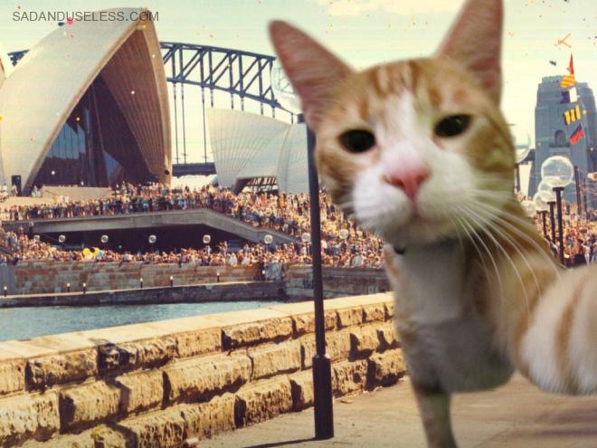 Cat travel selfie.