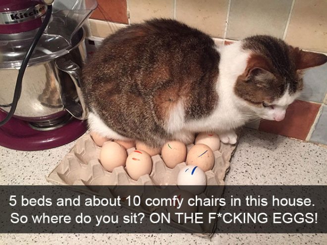 Cat logic.