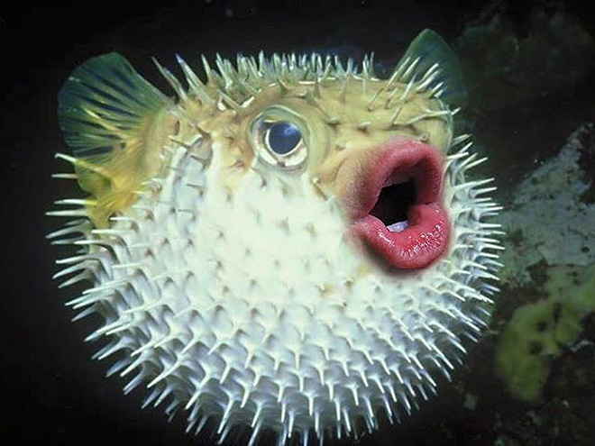 Animal + human mouth = terrifying.