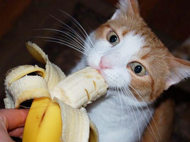 Cat eating a banana.