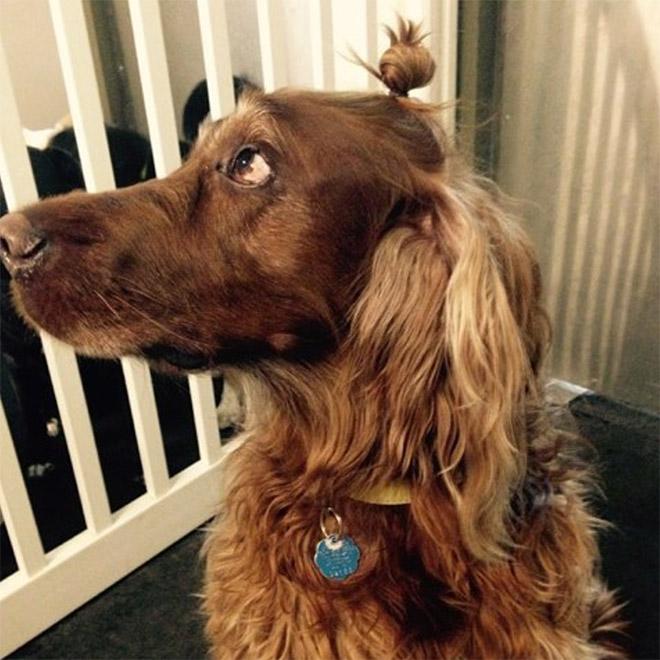 Stylish hipster dog with a man bun.