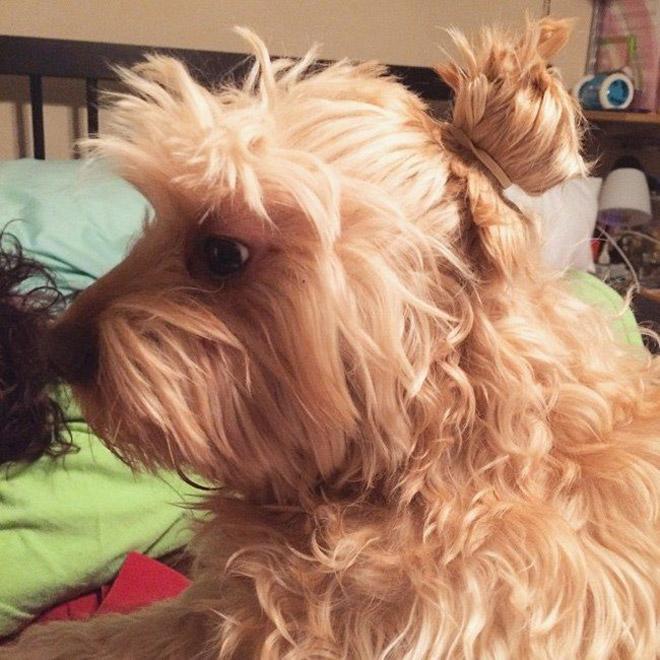 Dog bun.