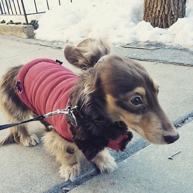 Hipster man bun dog.