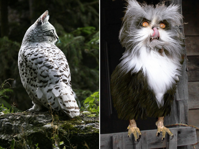 Cat + owl = meowl.