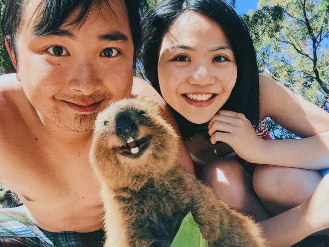 Meet quokka: the cutest animal in Australia.