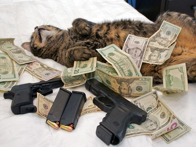 Rich gangster cat.