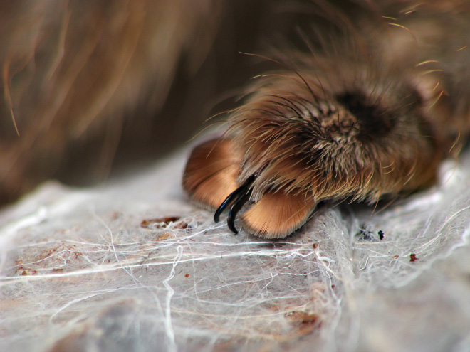 Did you know how cute spider paws are?