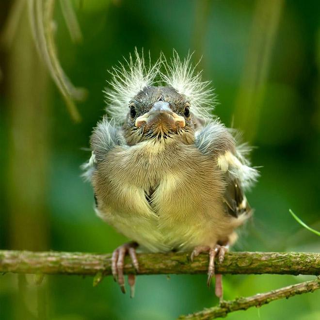 Birdie Sanders.
