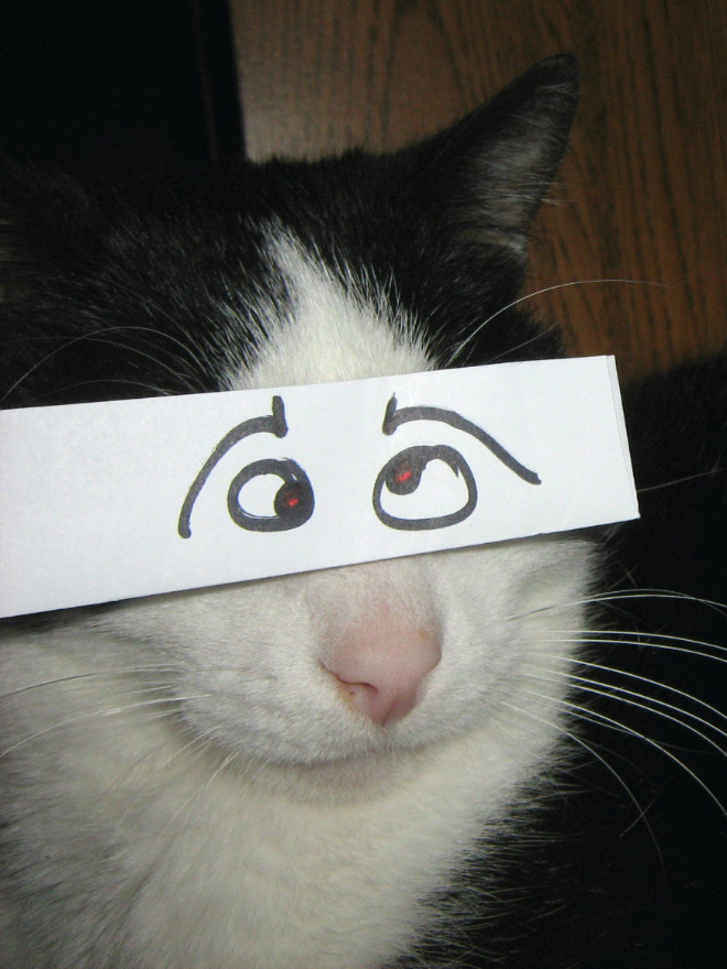 Cat with cartoon eyes.