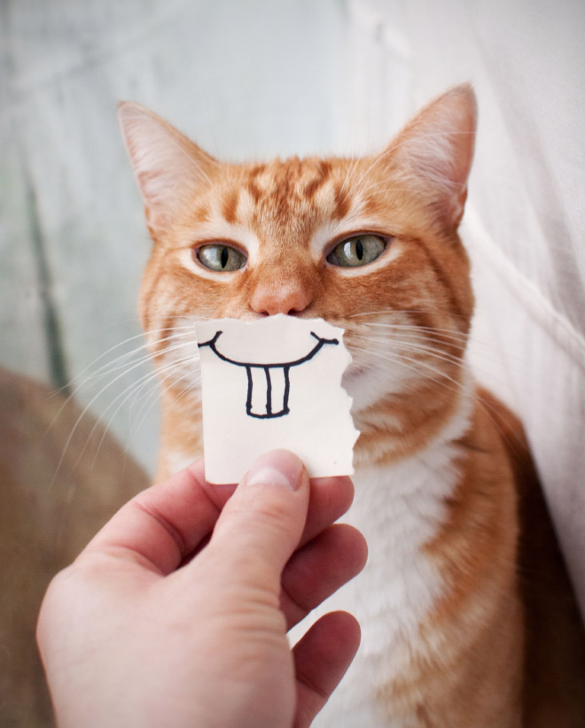 Cats look so much better with cartoon mouths.