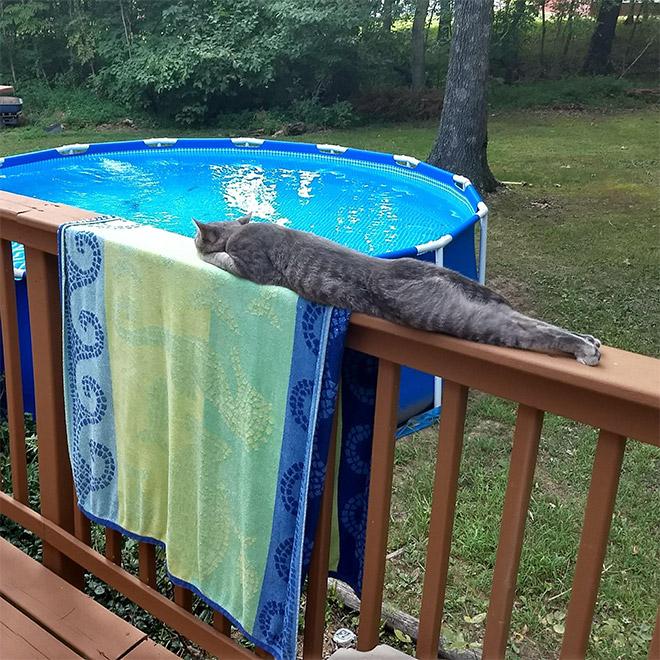 Long snakecat.