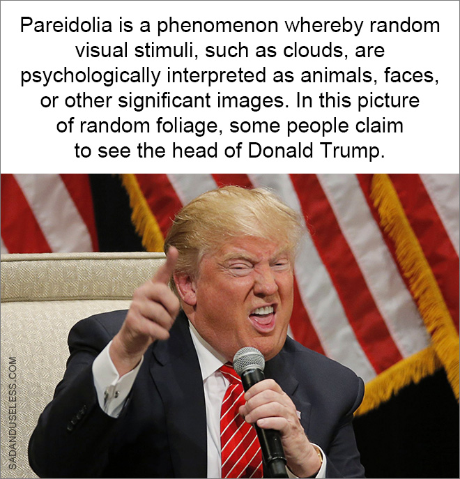 Pareidolia is a phenomenon whereby random visual stimuli, such as clouds, are psychologically interpreted as animals, faces, or other significant images. In this picture of random foliage, some people claim to see the head of Donald Trump.