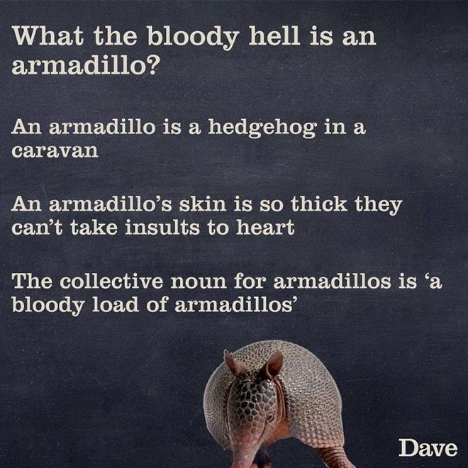 Brilliant description.