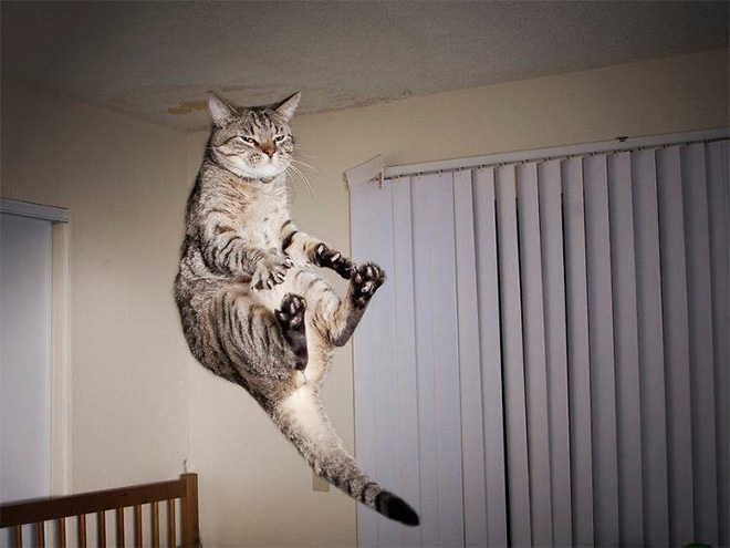 Cat being abducted by UFO.