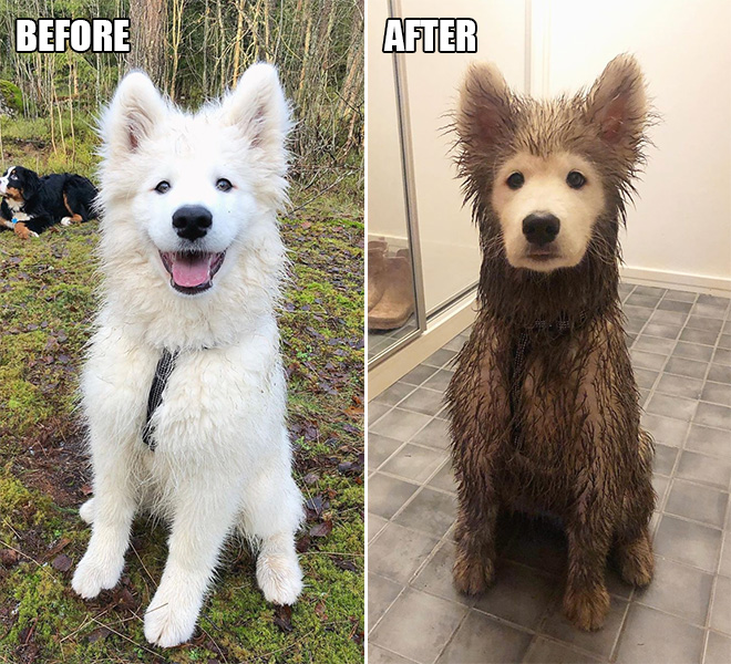 Before and after playdate.