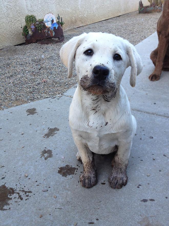 Adorable little mud monster.