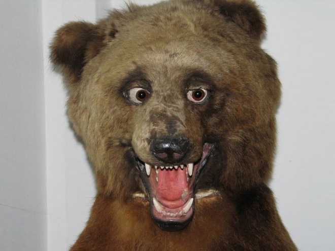 When taxidermists fail...