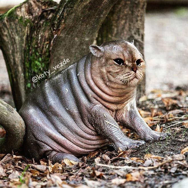 When a cat meets Photoshop...