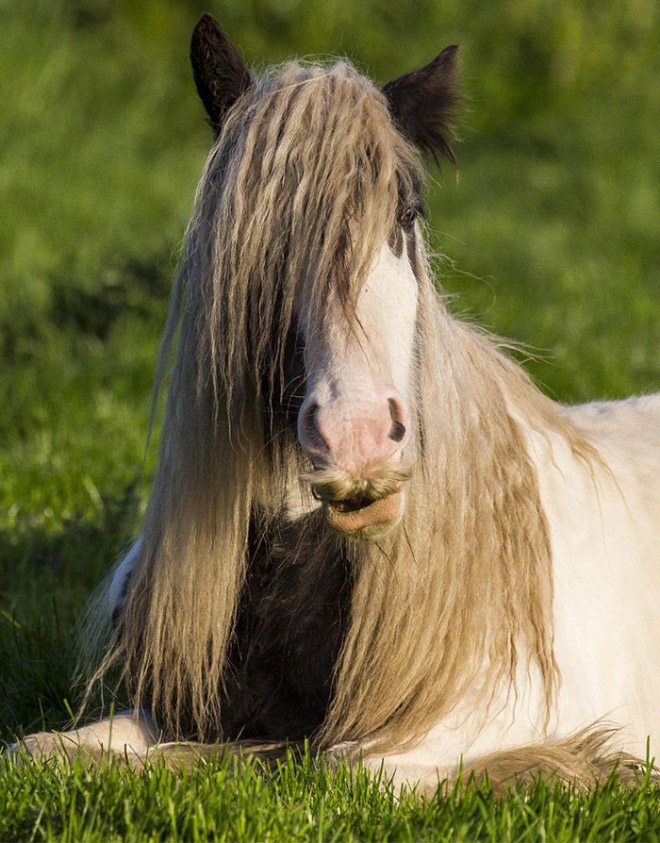 Did you know that some horses can grow mustaches?