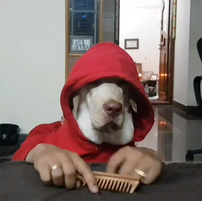 Dog with human hands.