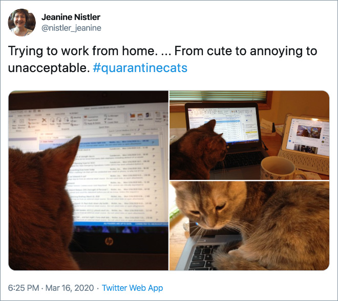 Trying to work from home. ... From cute to annoying to unacceptable.