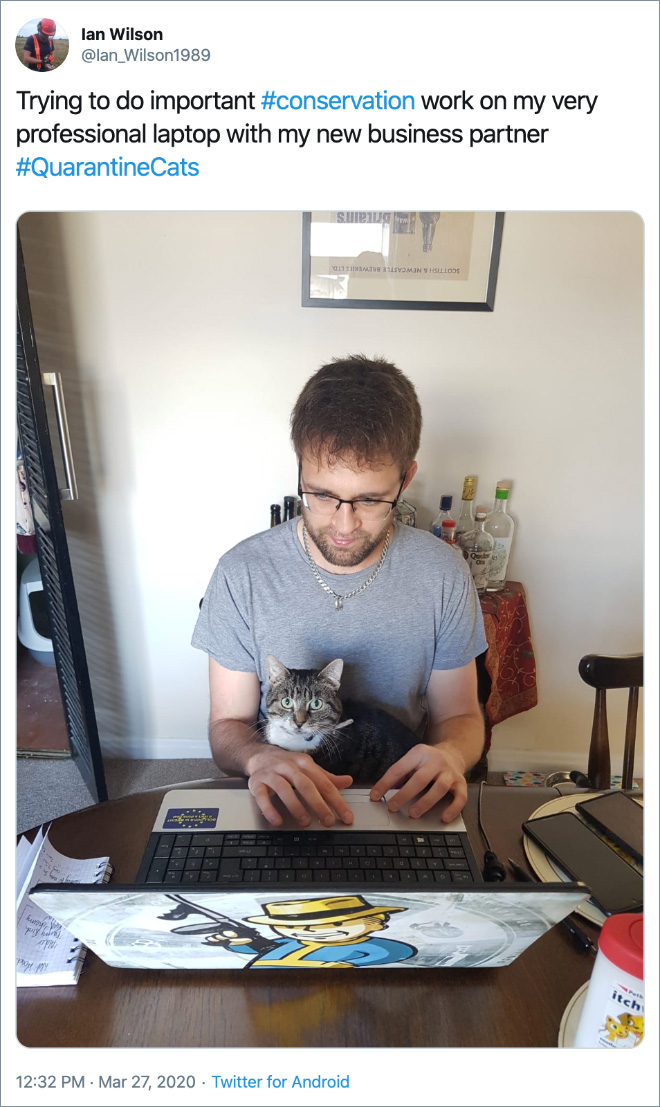 Trying to do important #conservation work on my very professional laptop with my new business partner #QuarantineCats