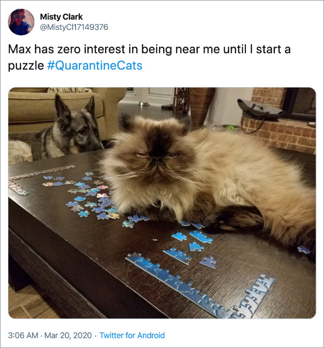 Max has zero interest in being near me until I start a puzzle.