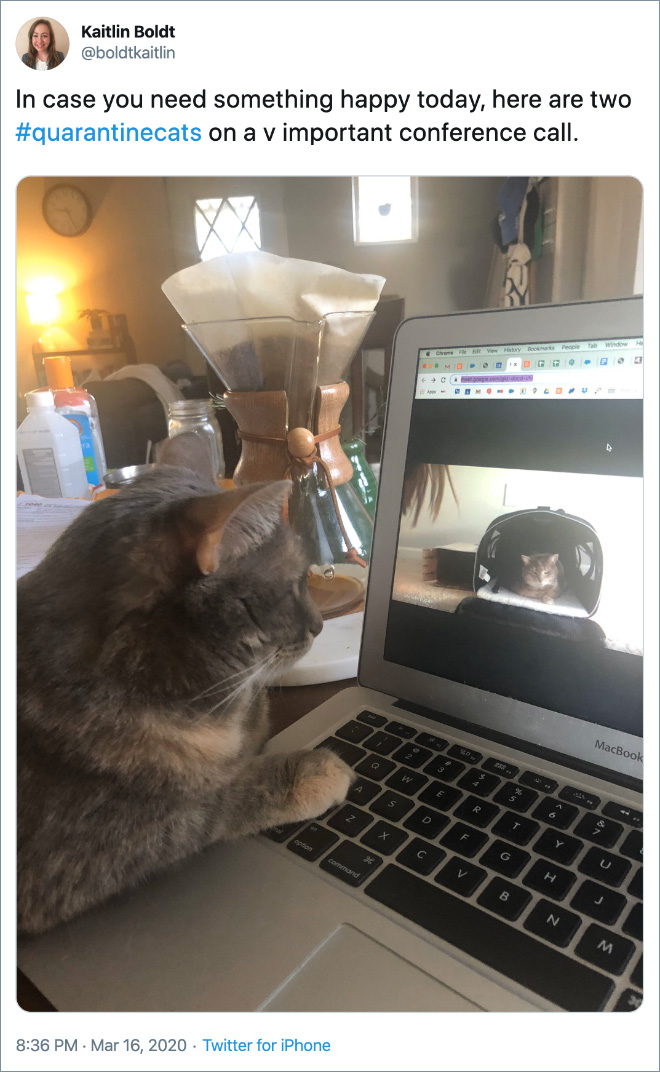 In case you need something happy today, here are two #quarantinecats on a v important conference call.